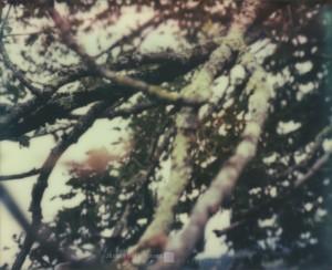 Äste / Branches