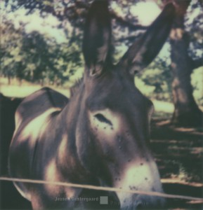 Freundlicher Esel mit Fliegen