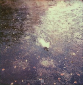 Der Hund, der gerne schwimmt / Le chien qui aime nager