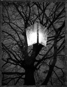 BaumLaterne / Tree Lantern