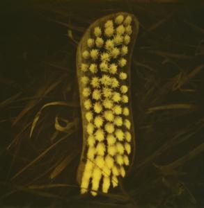 Gelbe Bürste / Yellow Brush
